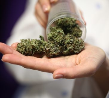 medical marijuana in the hand of a doctor.