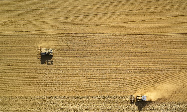 two harvesters on the field