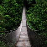 suspension bridge in forest