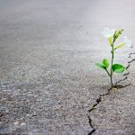 white flower growing out of crack in pavement