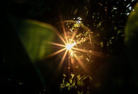 ray of light shining through trees