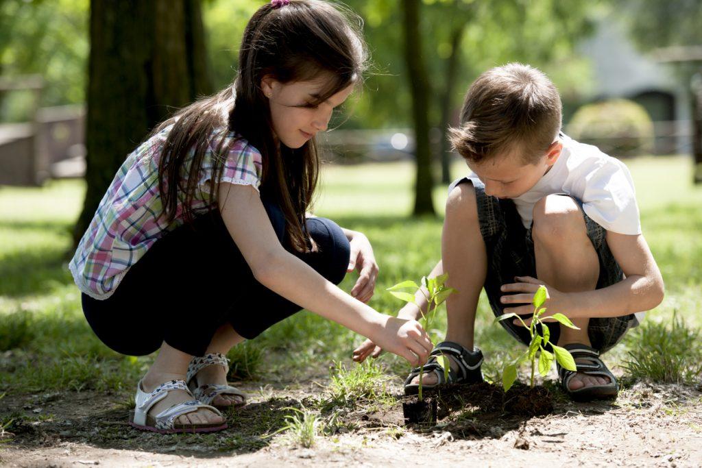Children planting a new tree.
