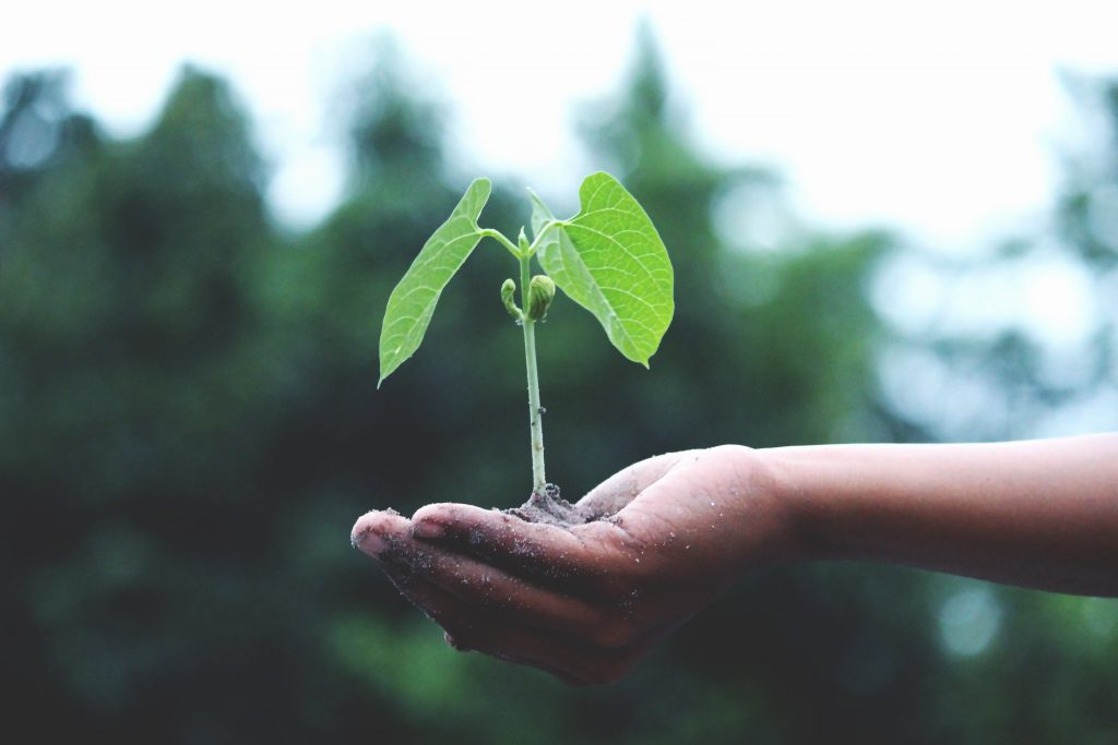 person holding green plant in palm
