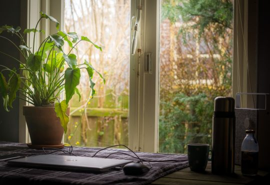 plants on windowsill in home office