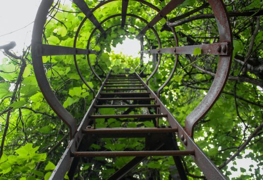 metal ladder ascending into trees