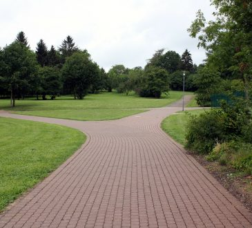 forked pathway going through a park