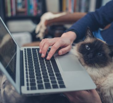 woman is using her laptop at home with a cat sitting on her lap