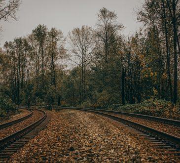 two train tracks running through woods