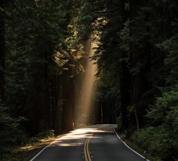 stream of light coming through forest on to road