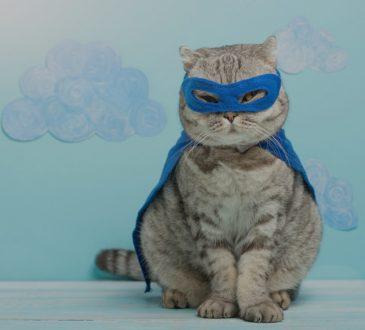 cat wearing superhero mask and cape