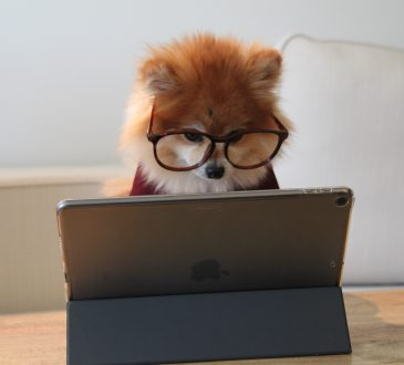 Pomeranian dog wearing glasses looking at tablet