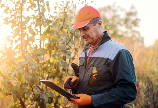Picture of adult lumberman in working uniform standing in woods and looking at projects on his tablet.