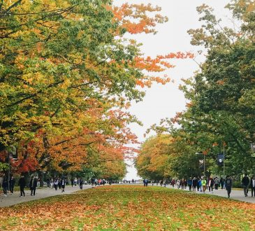 students walking between rows of trees on UBC campus