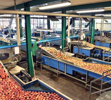 people working in apple processing plant