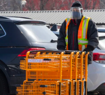 Grocery store worker collecting shopping carts in parking lot