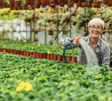 Older woman watering flowers in nursery.