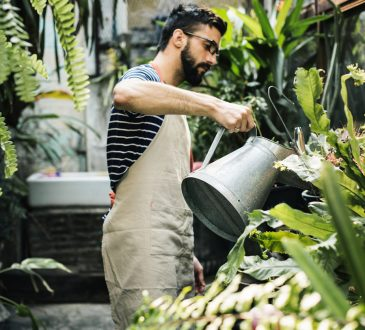 Man watering plants in greenhouse.