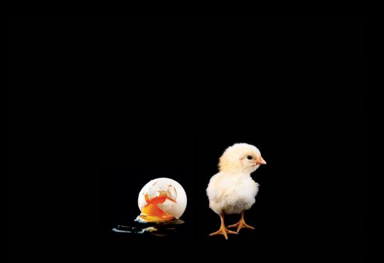 Broken egg and baby chick on black background.